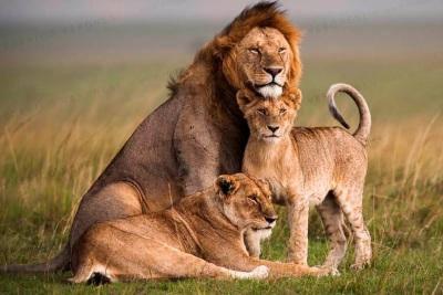 9 Days Kenyan & Tanzania Budget Safari